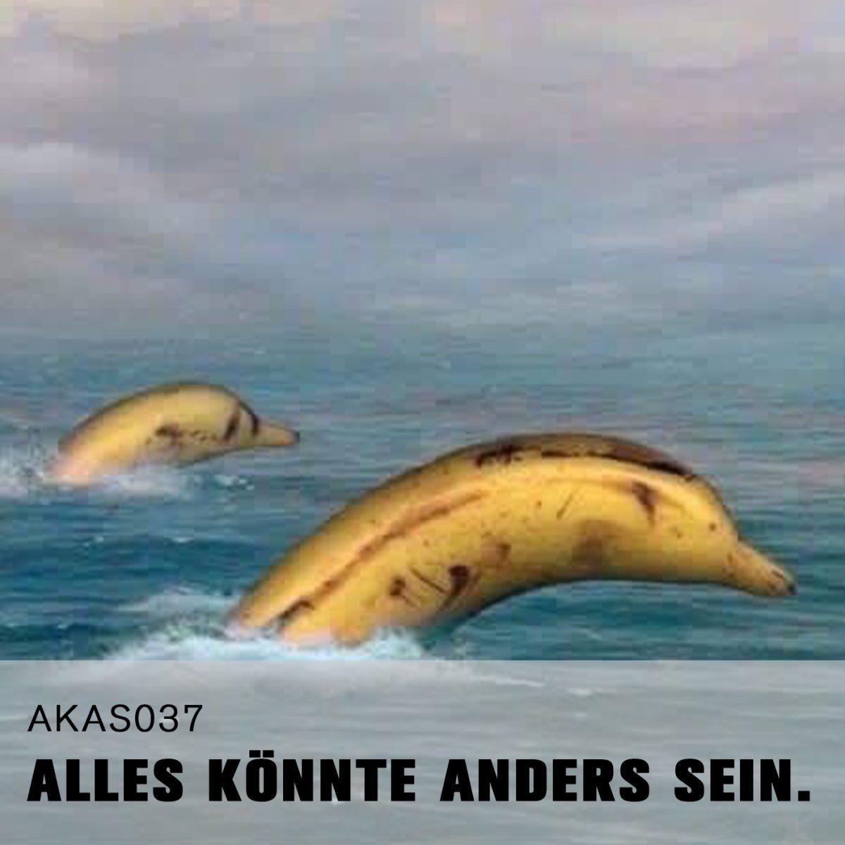 AKAS037 Die Fische gucken schon ganz traurig.